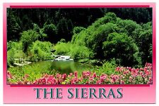 The Sierras Postcard California Northern Springtime Flowers Water Unposted