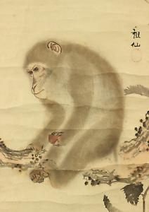 森狙仙 MORI SOSEN Japanese hanging scroll / MONKEY ON CHESTNUT TREE Box I504