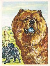 1952 Dog Art Portrait Austria Tobacco Company Bildwerk Trade Card CHOW CHOW