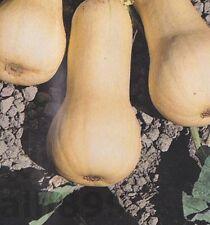Pumpkin Vegetable Plant Seeds