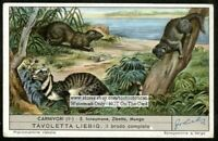 Egyptian Mongoose And India Civet NICE 60+ Y/O Trade Ad  Card