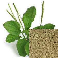 Plantain powder, organic, soap making supplies, Natural colorant.