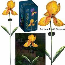 IRIDE GIALLA FIORE Solare Luce Giardino Paletto Creekwood Regal Art & Gift Boxed