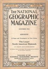 1916 National Geographic November - Large North American Mammals in color