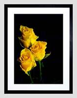 BOUQUET YELLOW ROSES PLANT BLACK FRAME FRAMED ART PRINT PICTURE MOUNT B12X9557