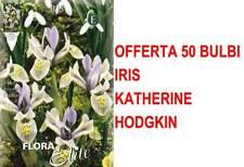 OFFERTA 50 BULBI IRIS HOLLANDICA KATHERINE HODGKIN BULBS BULBES