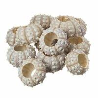"Sea Urchin | Purple Sputnik Sea Urchin Shells 2""-3"" | 12 Pack for Craft & Decor"
