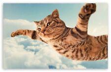 ZDJECIE, KARTKA, FREE PHOTO ,PICTURE , WIRTUALNA POCZTOWKA cat