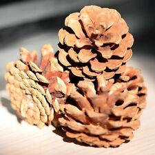 Natural Christmas Pinecones Ornaments Pendants Christmas Tree Decorations Pine