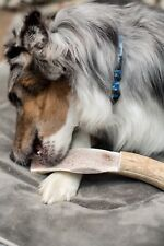 Amazing Treat!! Jumbo Combo Split Elk Antler Dog Chew-Free Shipping!