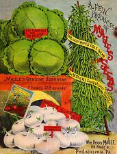Maule's Cabbage Vintage Vegetable Seed Packet Catalogue Advertisement Poster