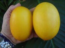 * Vine Peach Melon *  Mango Melon * Very Unique * Fast & Eazy Growing 10 Seeds