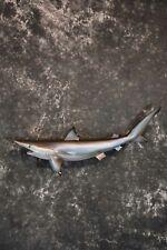 Sku 1303 Sand Tiger Shark Replica Taxidermy Mount Outstanding!