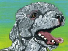 ACEO  Original Miniature Painting Bedlington Terrier Pet Dog Art -Carla Smale