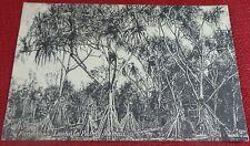 1910's Pandanus-Lauhala Palms Hawaiian Islands Steiner PMC #39B