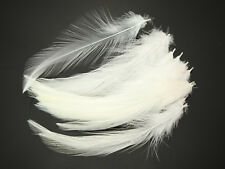Saltwater Neck Hackle Fly Tying Material Feathers Available In 12 Colors -C2
