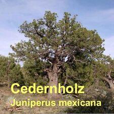 ***Cedernholzöl , Zeder Texas (Juniperus mexicana), 50ml  Topp-Saunaöl!!