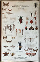 Hi-Q, XL-Format Poster~1862 Hand-Colored Entomology Engravings ~ Insects Bugs