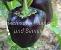🔥 🌶️ PURPLE BEAUTY PEPPER * schwarze runde Paprika * Rarität 10 Samen Balkon