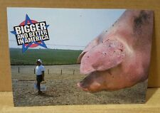 New Postcard ~ Bigger and Better in America  (Pig)