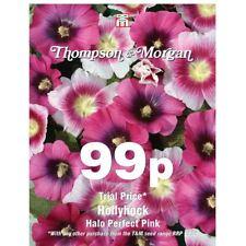 Thompson & Morgan - Fiore - Altea Halo Perfetto Rosa - 25 Semi
