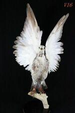 Taxidermy handmade piegon bird stuff home deco display education birth gift V16#