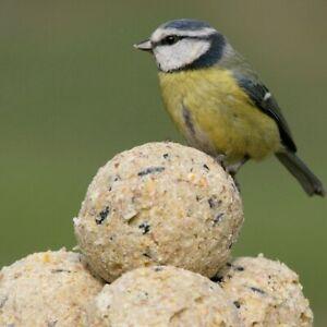 10  WILD BIRD FOOD SUET DUMPLING  FAT BALLSWITHOUT NETS