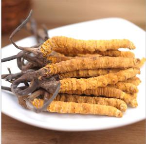 100% natural Tibetan wild Ophiocordyceps Sinensis/Cordyceps sinensis Wholesale