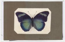 Watercolour painting of a butterfly  (C29618)