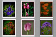 6 Garden Flowers Original Photo Blank Greeting Note Cards Iris Tulip Poppy Rose