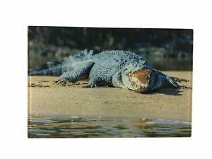 Salt Water Crocodile Photograph Print on Acrylic AU Sellers 30cmx20cm Great Gift