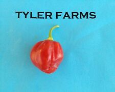 25+ Hot Caribbean Red Habanero Pepper seeds (organic chili, chile)