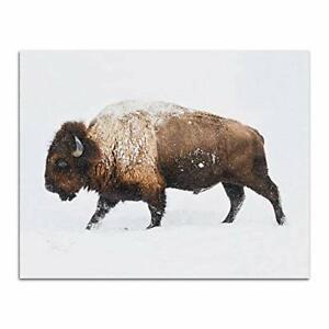 Buffalo Digital Print Bison Photography Wall Decor Poster, Buffalo, No Frame