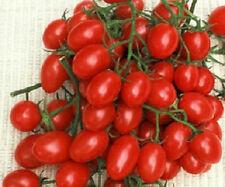 50 Seeds Rosalita Tomato Seeds Garden Seeds