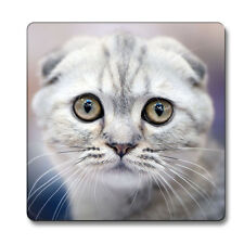 Scottish Fold Cat Animal Magnet