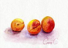 Apricots, fruit, Watercolor Original Painting from the Artist