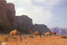 B25922 Camels in the Dead area Animaux Animals israel