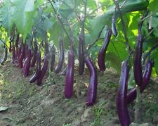 150* Non-Gmo Garden Long Purple Eggplant Seeds Bank Survival Organic Plant New