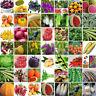 200 stk Gemischt Tomatensamen Hausgarten Gemüse Obst Samen Saatgut
