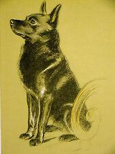 Lucy Dawson Obedient Schipperke at Attention 1937 Vintage Dog Print Matted