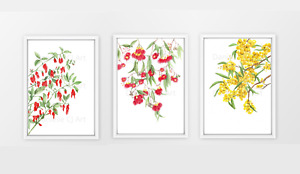 Set of 3 Native Australian Botanical Prints - Flowering Gum, Wattle, Coral Pea
