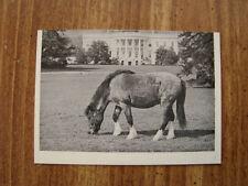1964 JOHN F. KENNEDY Trading Card Caroline Kennedy's Pony Macaroni (B25)