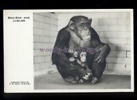 an0340 - Chimpanzee - Boo-Boo and her baby Jubilee, pose for Camera's - postcard