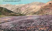 Kern County California Wildflowers Off Golden State Highway CA Vintage Postcard