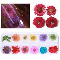 12 Farbe/Boxen 3D Trocken Blumen Nagel Kunst Dekoration Dry Flower Nail Stickers