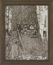 WE NEED A BIGGER SAW B&W Old Time Photo 20x24 FRAMED PRINT PICTURE Logging Tree
