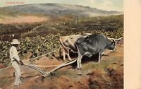 CUBAN PLOW HANDMADE AGRICULTURE POSTCARD 1900AS