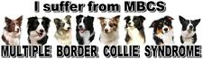 """I Suffer from  MULTIPLE  BORDER COLLIE  SYNDROME"" Dog Car Sticker by Starprint"