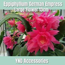 Eppiphyllum German Empress Succculant  plant fresh cutting