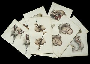 1865 Set of 9 Antique lithographs of OBSTETRICS, GINECOLOGY, PREGNANCY, ANATOMY.
